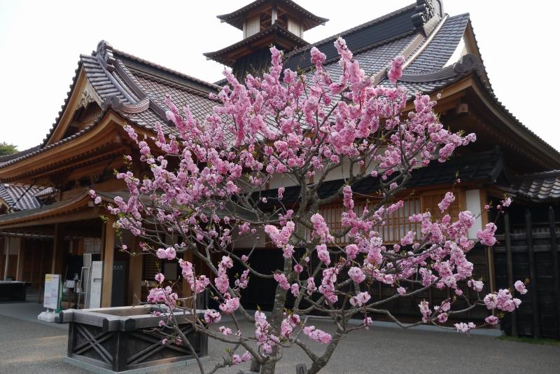 https://www.hakodate-bugyosho.jp/news-asset/2015/04/28/P1020443.jpg